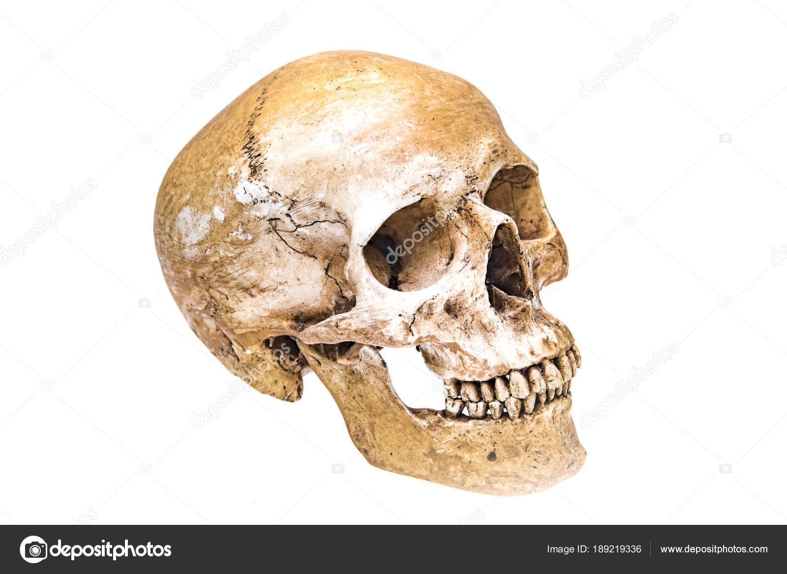 Virtual Reality Human Skull Isolated White Background — Stock Photo ...