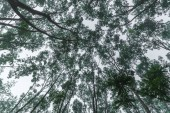 la vista della natura della foresta tropicale con il grande albero, immagine filtro dellannata