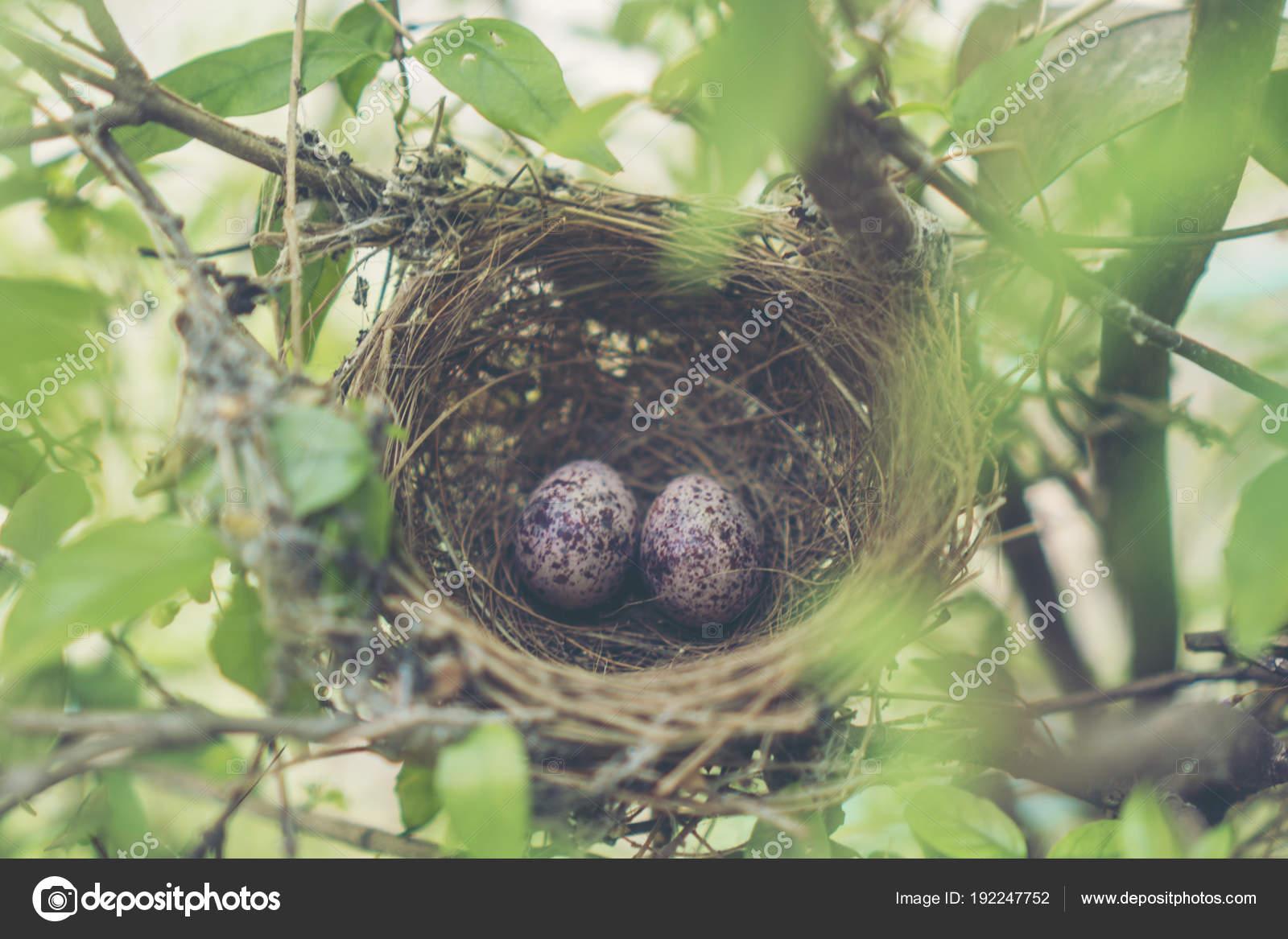 μεγάλο πουλί ομαδικά φωτογραφίες poran σεξ video.com