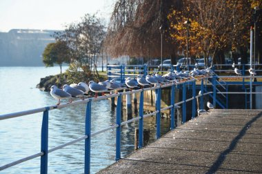 Beautiful view of birds on railing, Lovere, Lake Iseo, Italy
