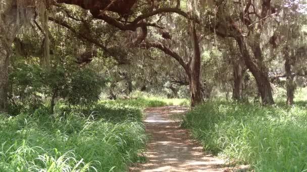 pěší cesta lesem oak
