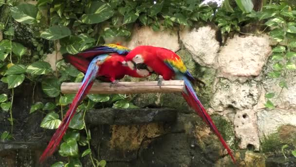 Ara arakanga, červený papoušek prohlížení
