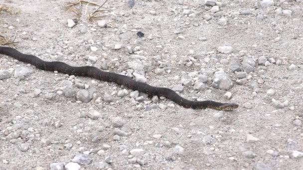 Pruhované vodní had zmizí