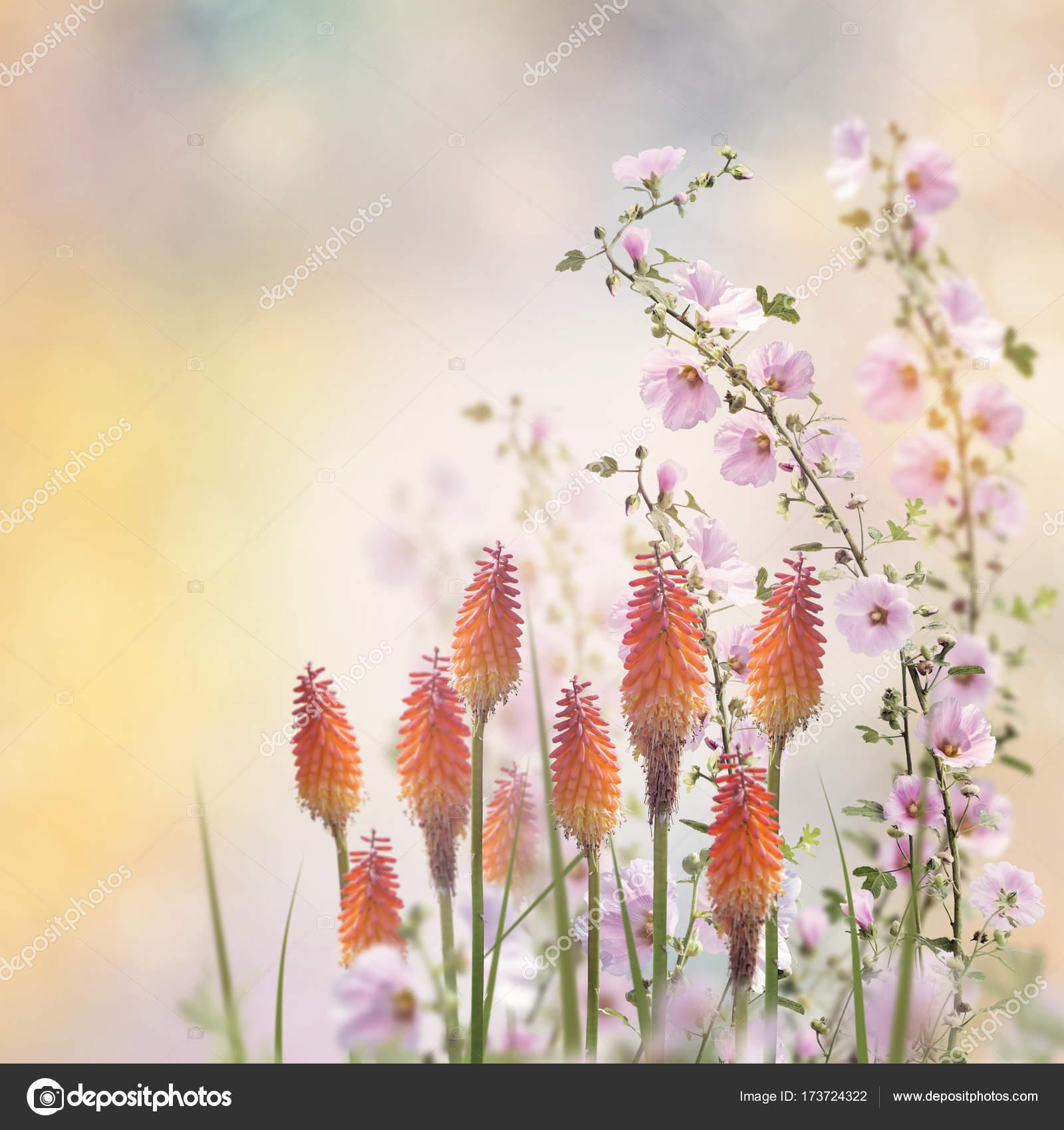 Schöne Blumen Im Garten Stockfoto Svetas 173724322