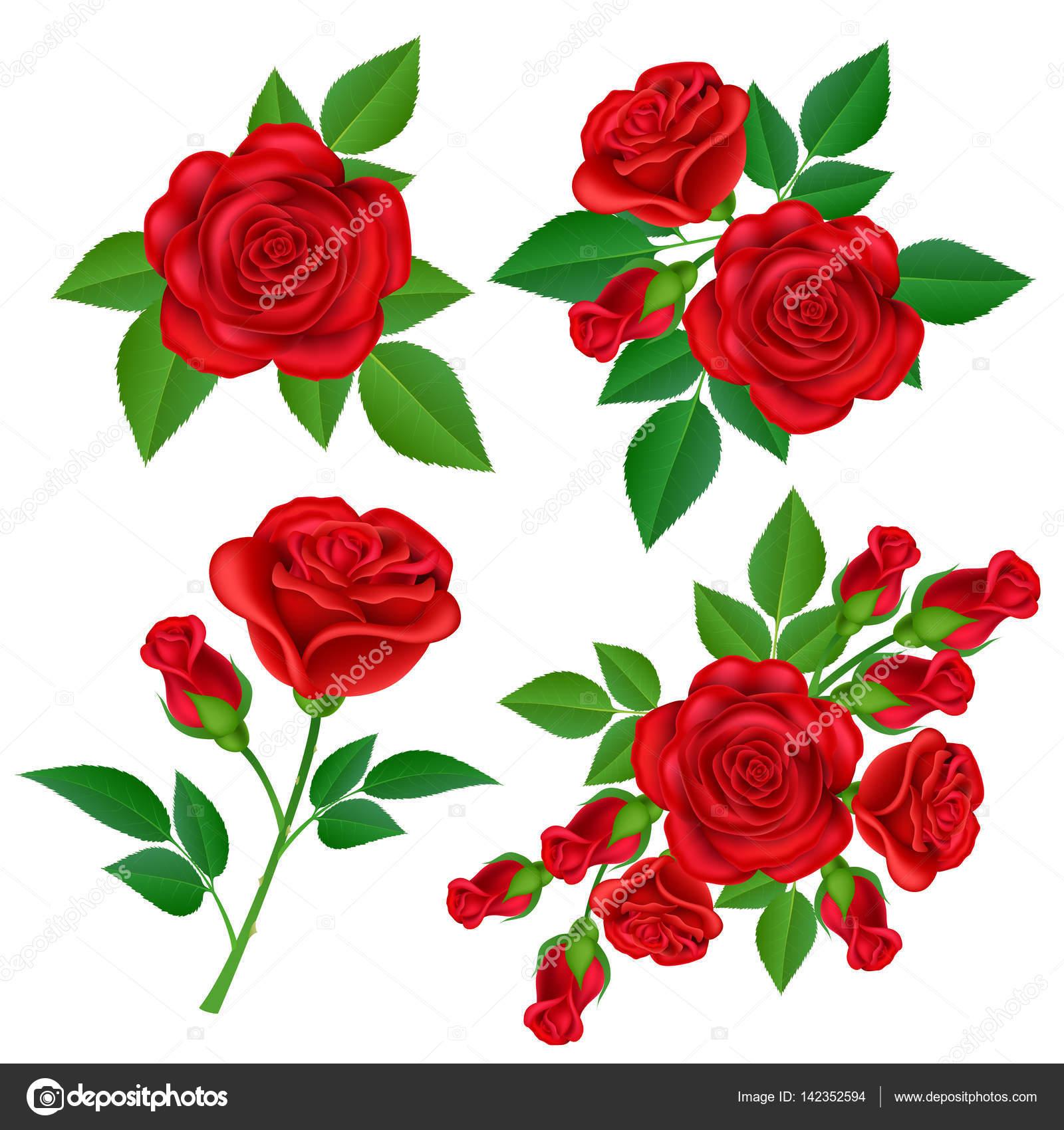 赤い赤い薔薇セットのリアルなイラスト ストックベクター