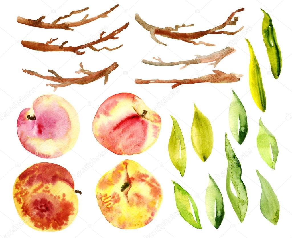 Set watercolor peaches, fruit, leaves, branches.