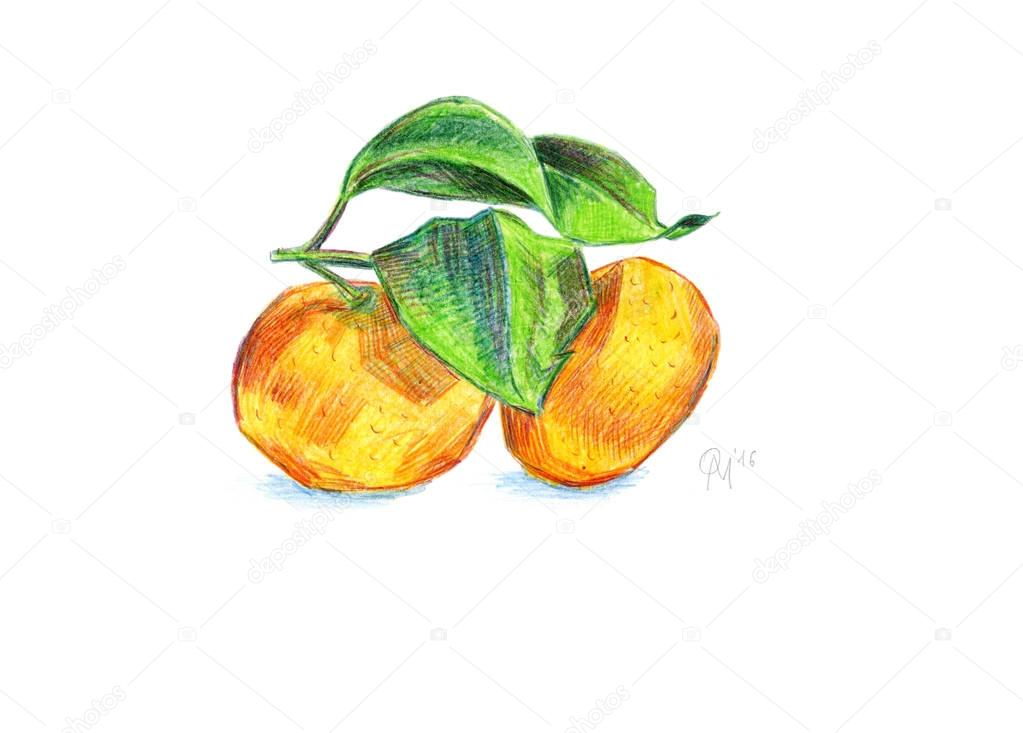 Two tangerine with leaves on a branch