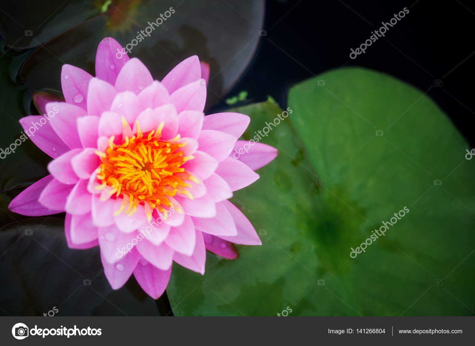 Top view of ping lotus the icon of spa and yoga stock photo top view of ping lotus the icon of spa and yoga stock photo izmirmasajfo