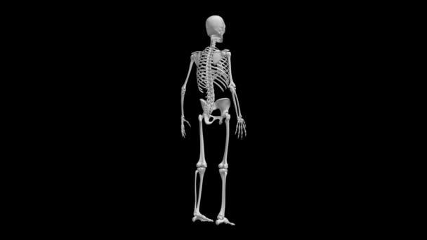 Kostry modelu otáček
