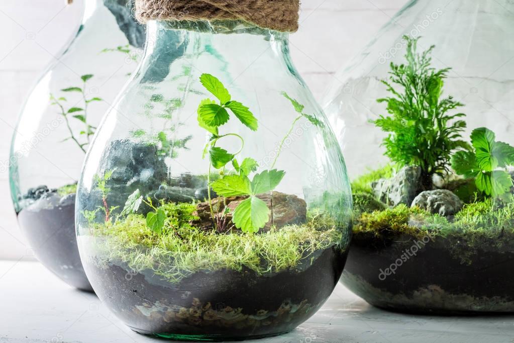 sch ne lebende pflanzen in einem glas zu retten die erde idee stockfoto shaiith79 129495816. Black Bedroom Furniture Sets. Home Design Ideas