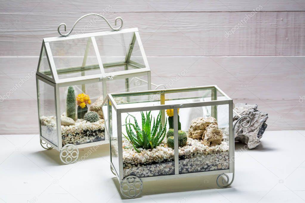 Petit Cactus Vivants Dans Un Petit Terrarium Photographie