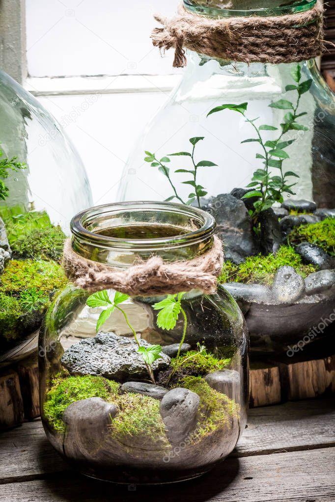 atemberaubende regenwald in einem glas retten die erde. Black Bedroom Furniture Sets. Home Design Ideas