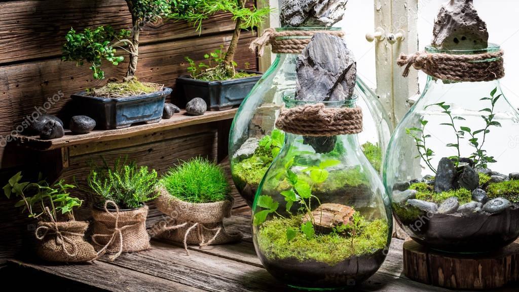 wunderbare glas mit waldst ck mit selbst kosystem. Black Bedroom Furniture Sets. Home Design Ideas