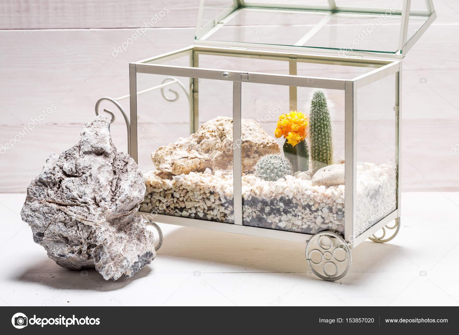 Wonderful Terrarium With Cactus And Piece Of Desert Stock Photo C Shaiith79 153857020