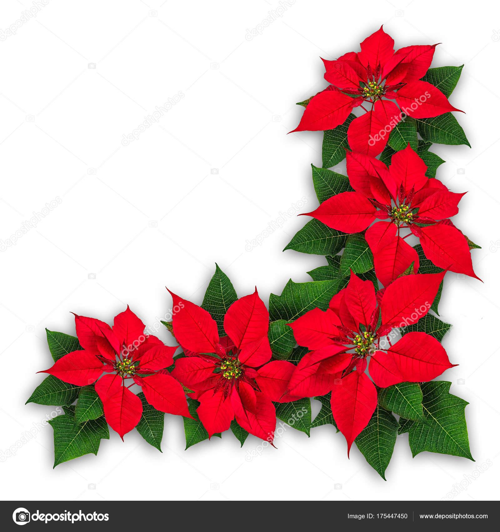 Im genes flor de nochebuena decoraci n de navidad de for Adornos navidenos 2017 trackid sp 006