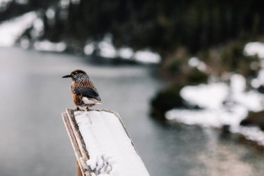 beautiful bird in mountains