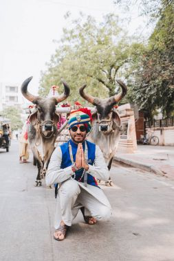Indian white bulls for Sankranthi Festival