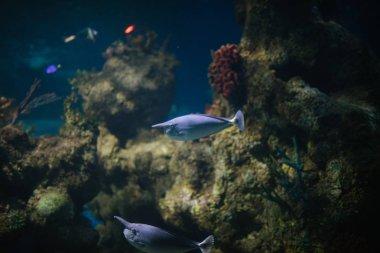 fish in blue aquarium