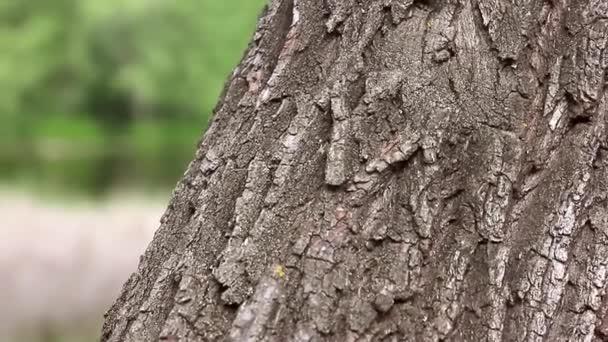 Detailní záběr kmen stromu pozadí s lesní.