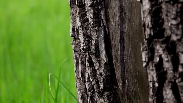 Közelről a törzs az erdő fa háttér.