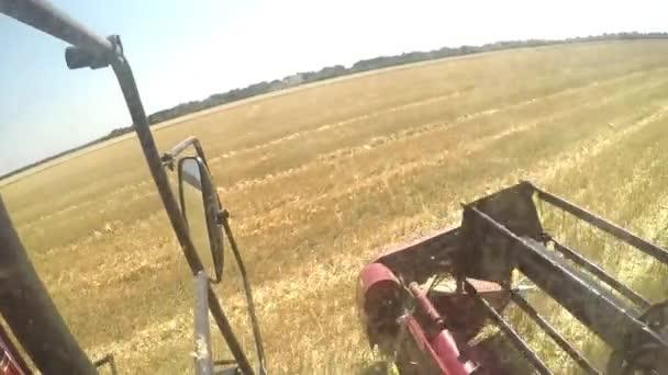 Kombajn v akci na pšeničné pole. Pohled z kabiny řidiče, pohled z první osoby.