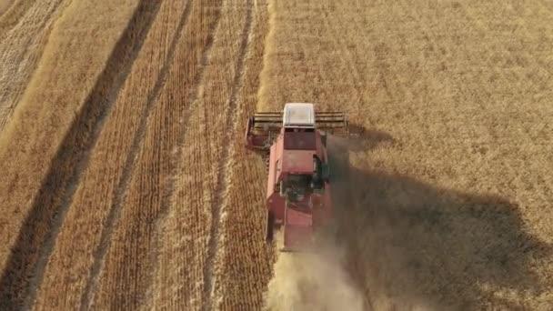 Letecký pohled na kombinovaný zemědělský stroj na sklízení zralého zlatého pšeničného pole při západu slunce. Sklizeň obilných polí, období sklizně.