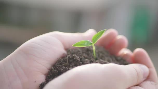 Kis zöld növény nő talajból egy gyermek kezében.