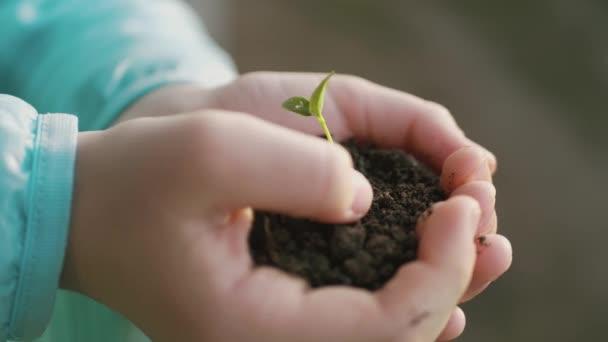Malá zelená rostlina vyrůstající z půdy v dětských rukách.