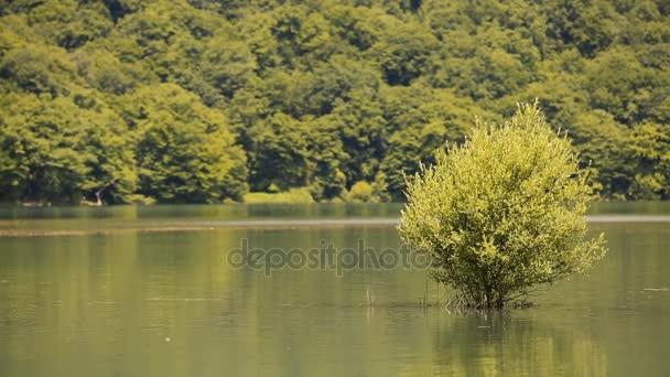 jezero a Les