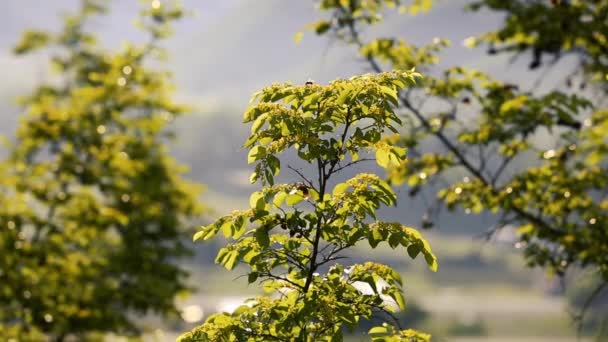 Krajina v prirode na Kavkaze. Letní přírody. Stromy rostou na terénu. Ázerbájdžán krajiny