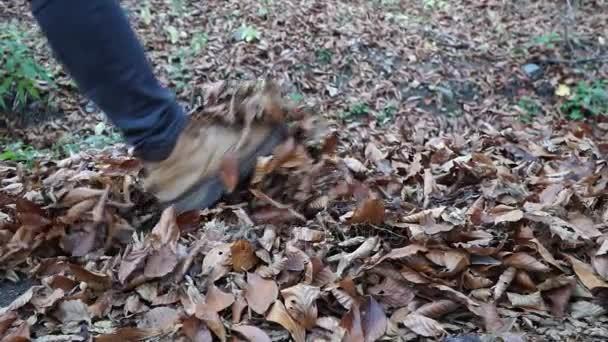 ősszel lehullott levelek és a férfi őszi séta