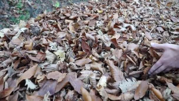 autumn fallen leaves and man walking in fall