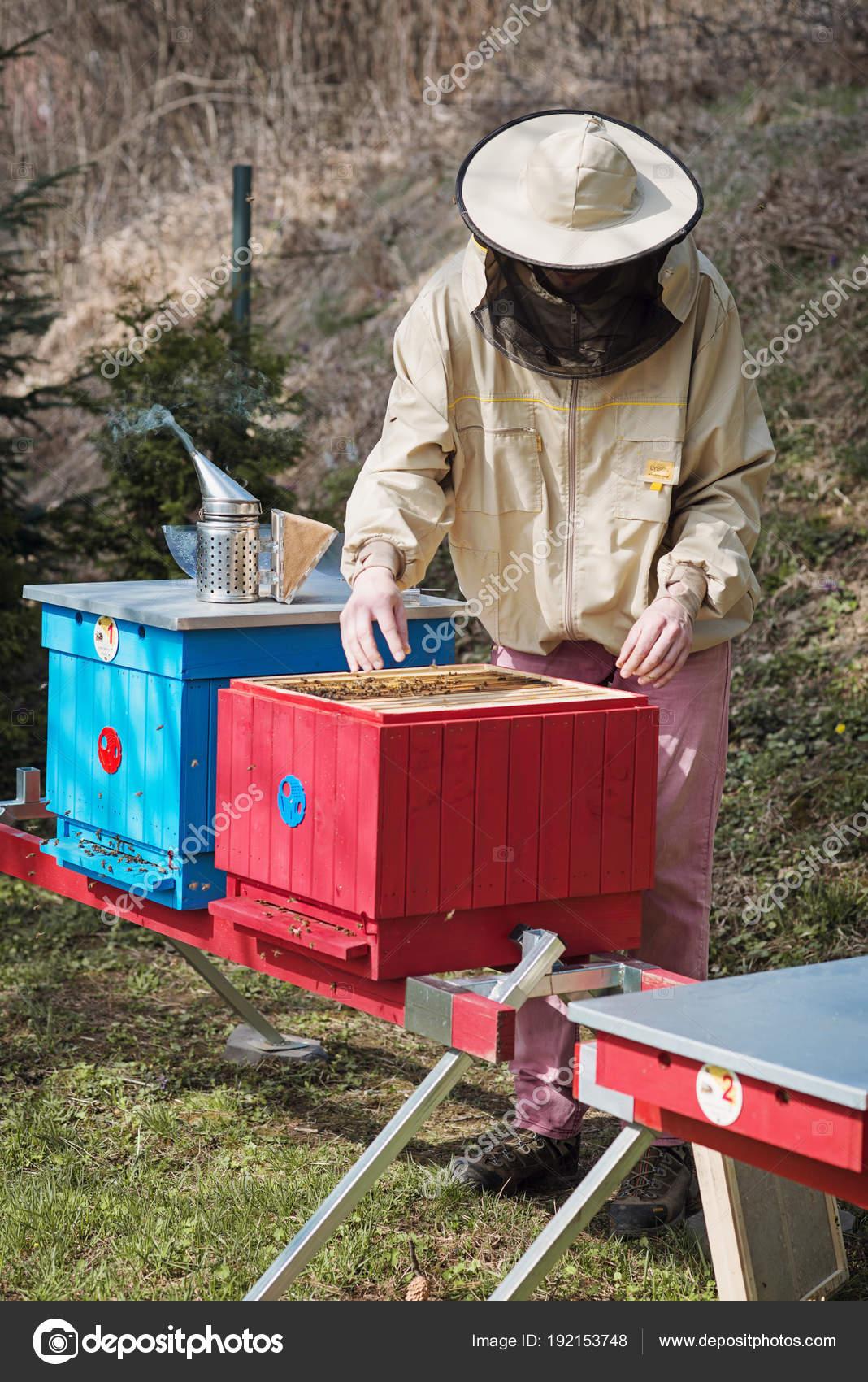 Junge Imker Arbeiten Im Bienenstock Im Garten Stockfoto