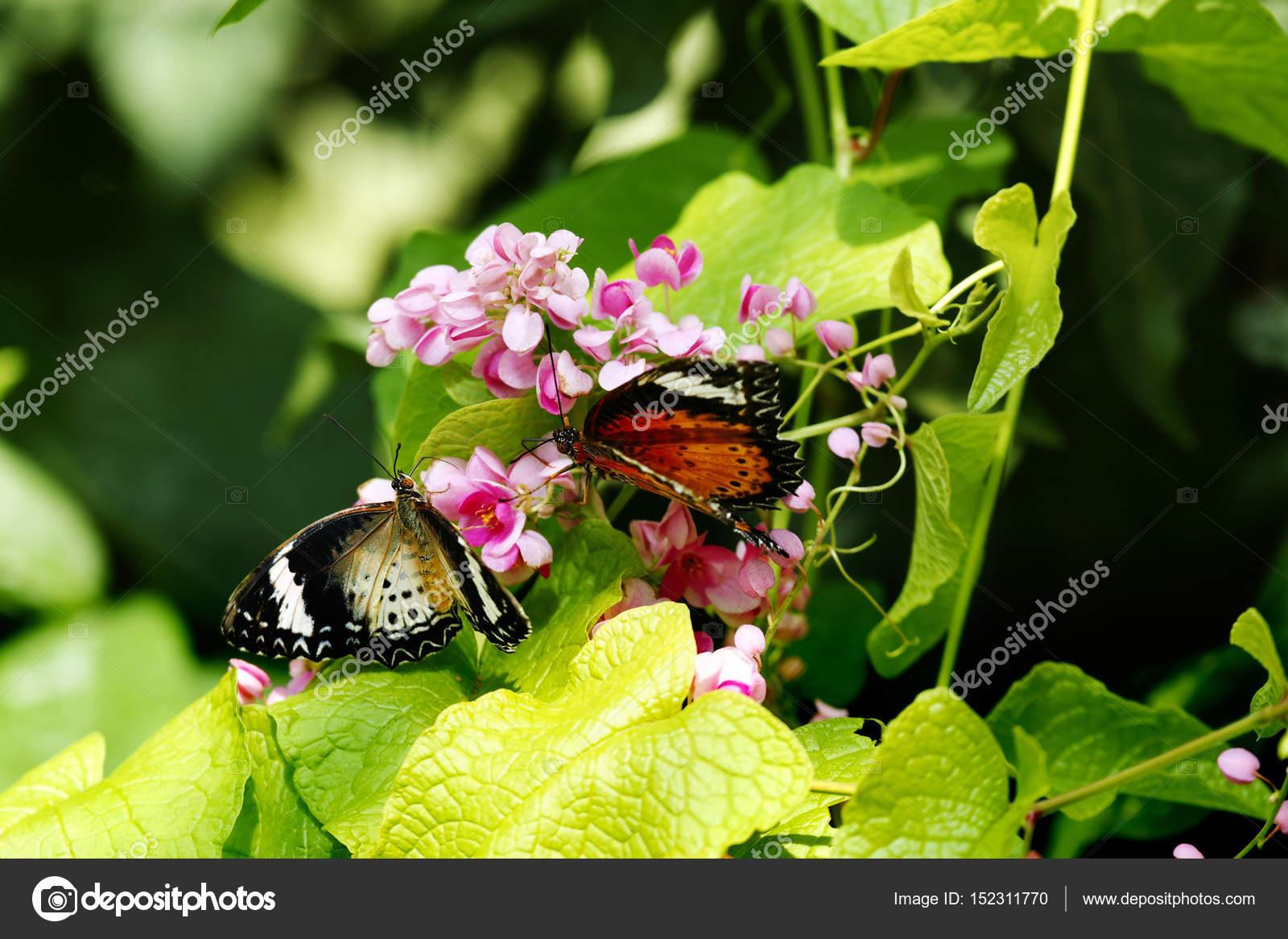 Primer plano de dos mariposas una naranja negro y uno blanco ...