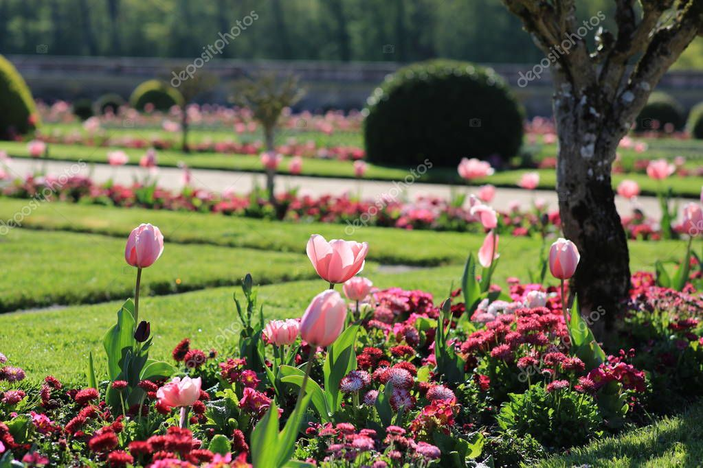 sample of landscape design with tulips