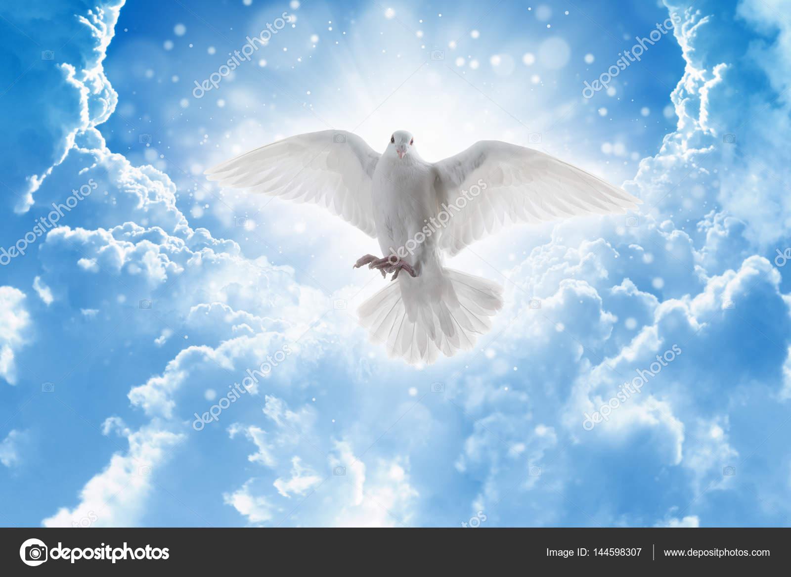 Espíritu Santo Vuela De Pájaro En Los Cielos, Luz Brilla