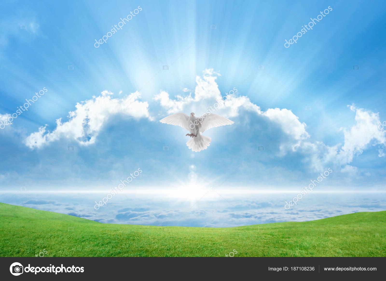 Blanca Paloma Espíritu Santo Pájaro Vuela En Cielos