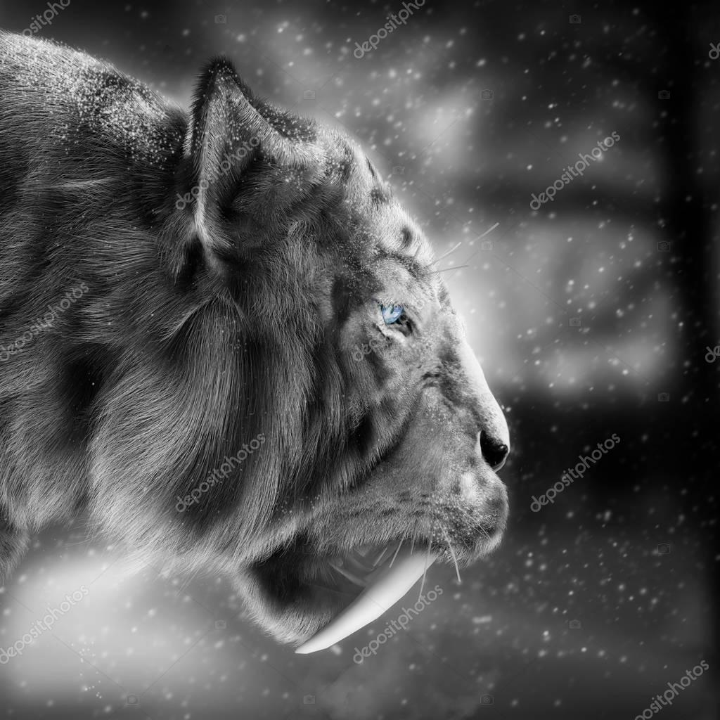 White tiger stalking its pray with a snowing winter background .