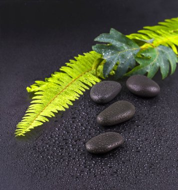 stacked wet spa stone with green leaf