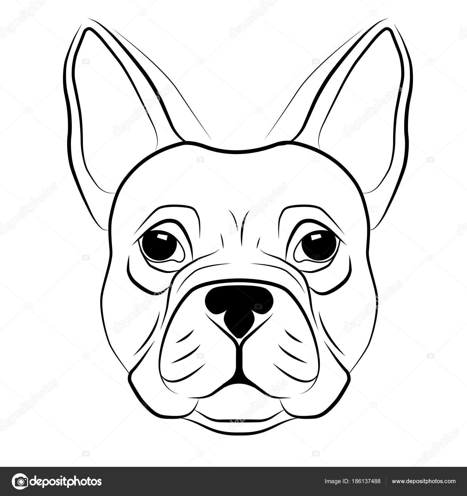 Bulldog Francese Testa Isolata Su Priorità Bassa Bianca Testa Di