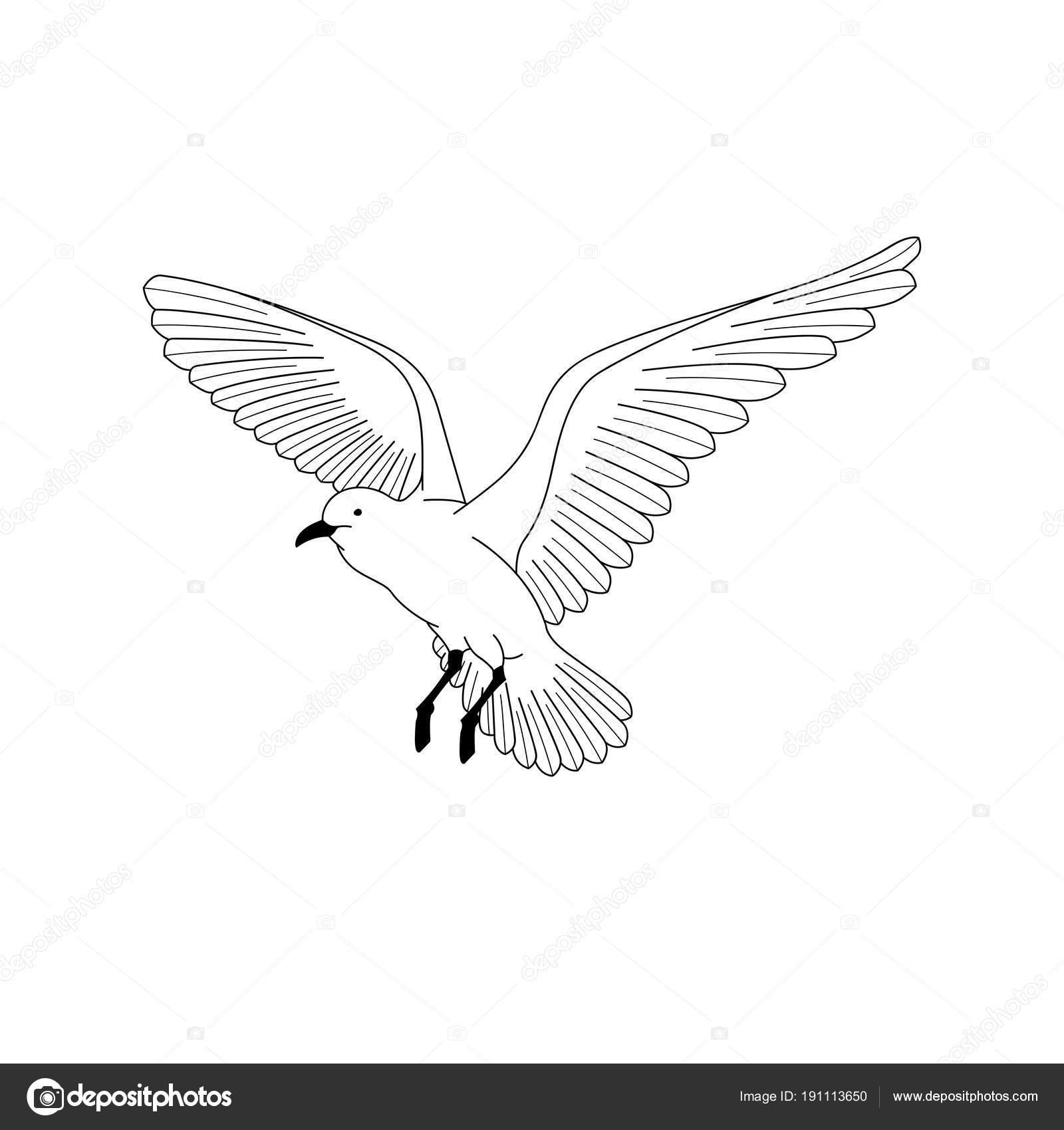 Oiseau Qui Vole Illustration De Vecteur Main Dessin Dessin Au