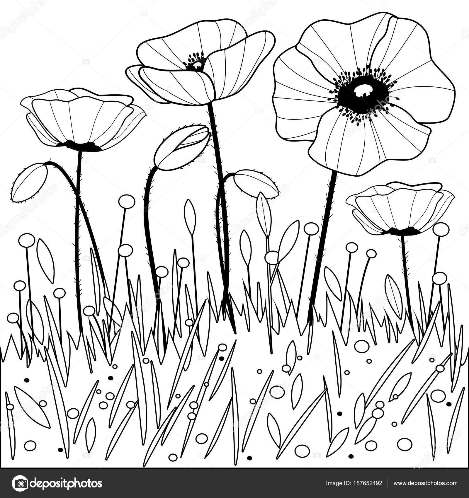 Flores de amapola. Blanco y negro para colorear página del libro ...