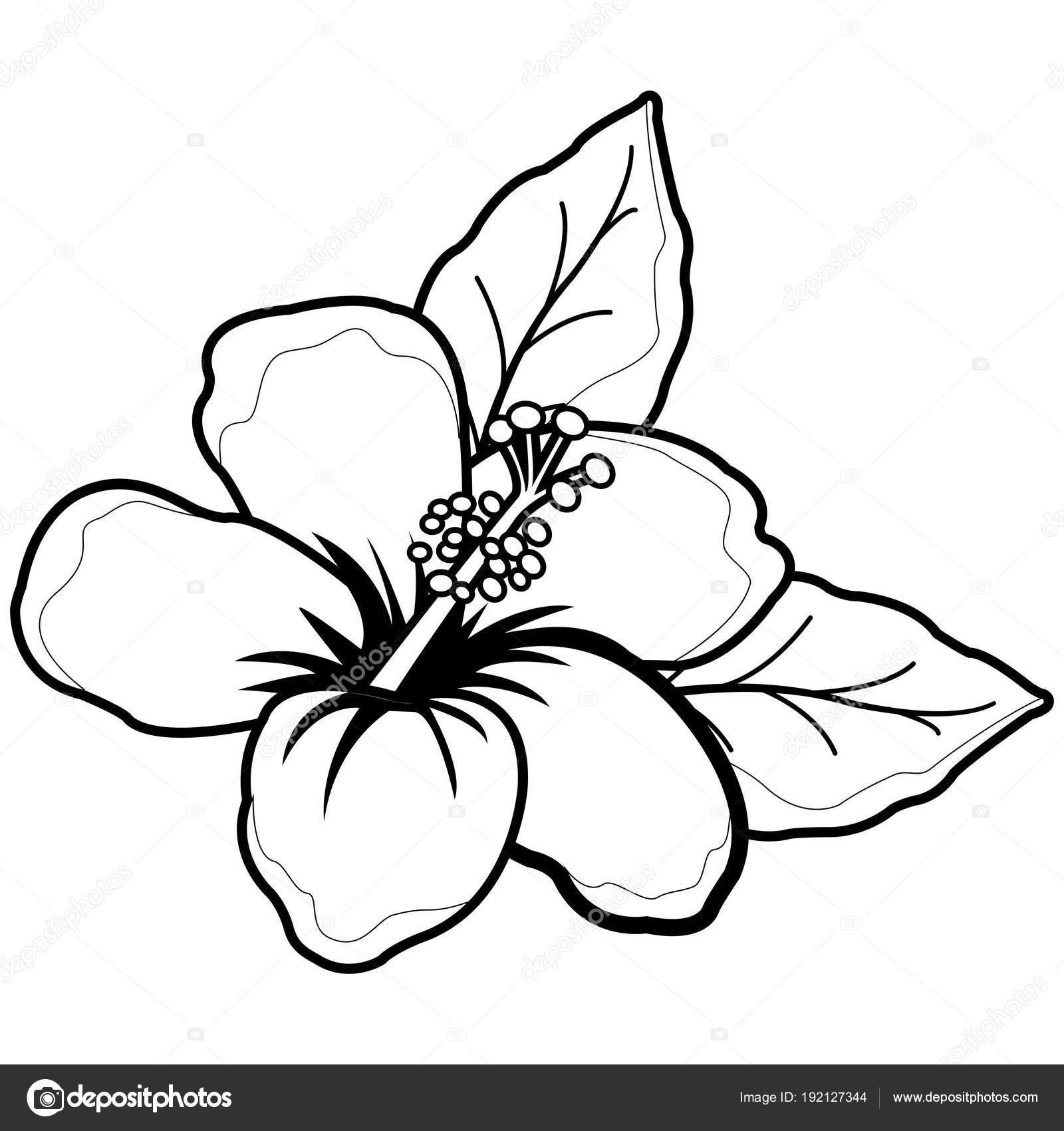Flor de hibisco hawaiano. Blanco y negro para colorear página del ...