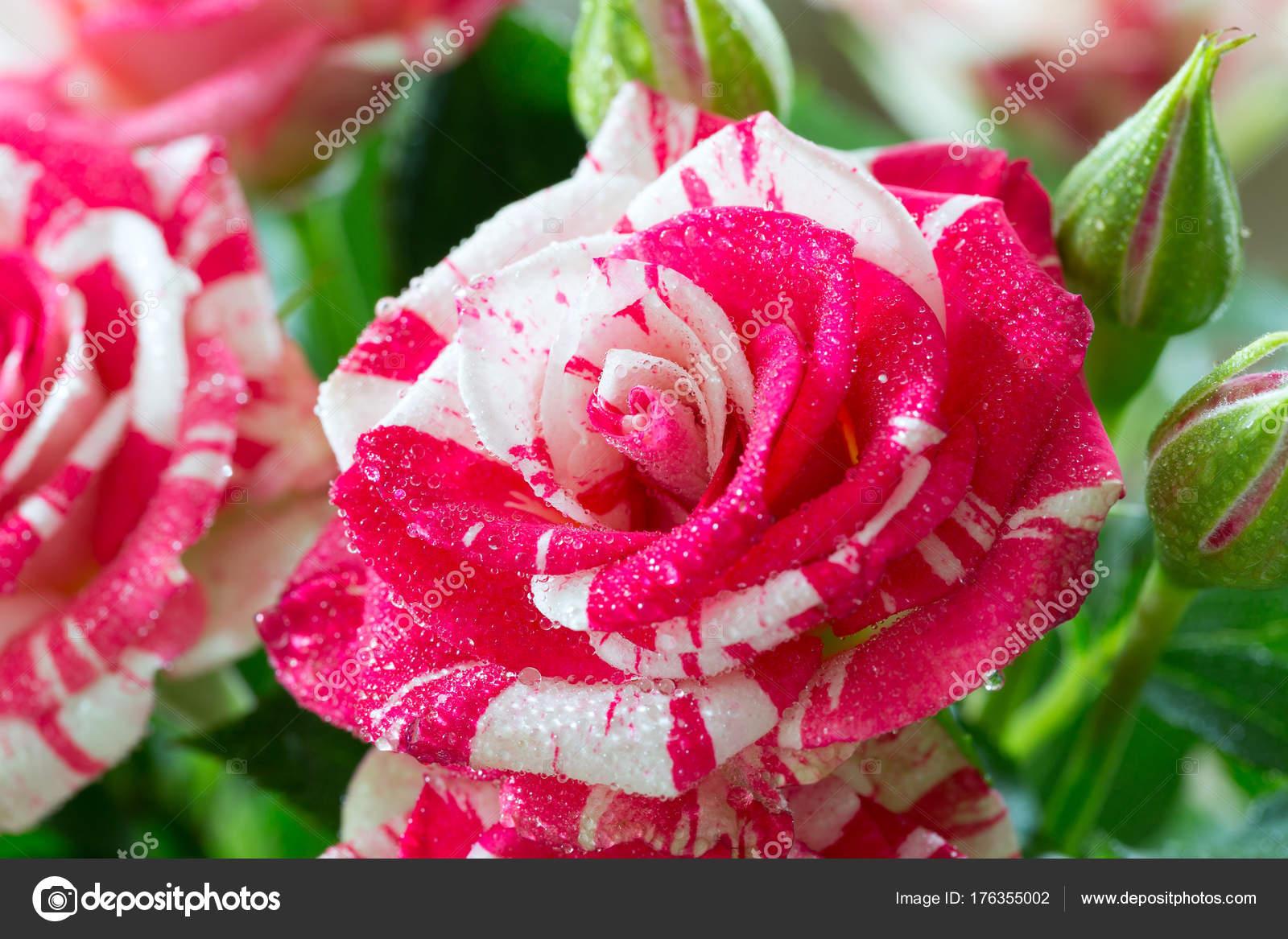 Нитки мулине перевод цветов