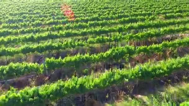 Letecká vinice výhled