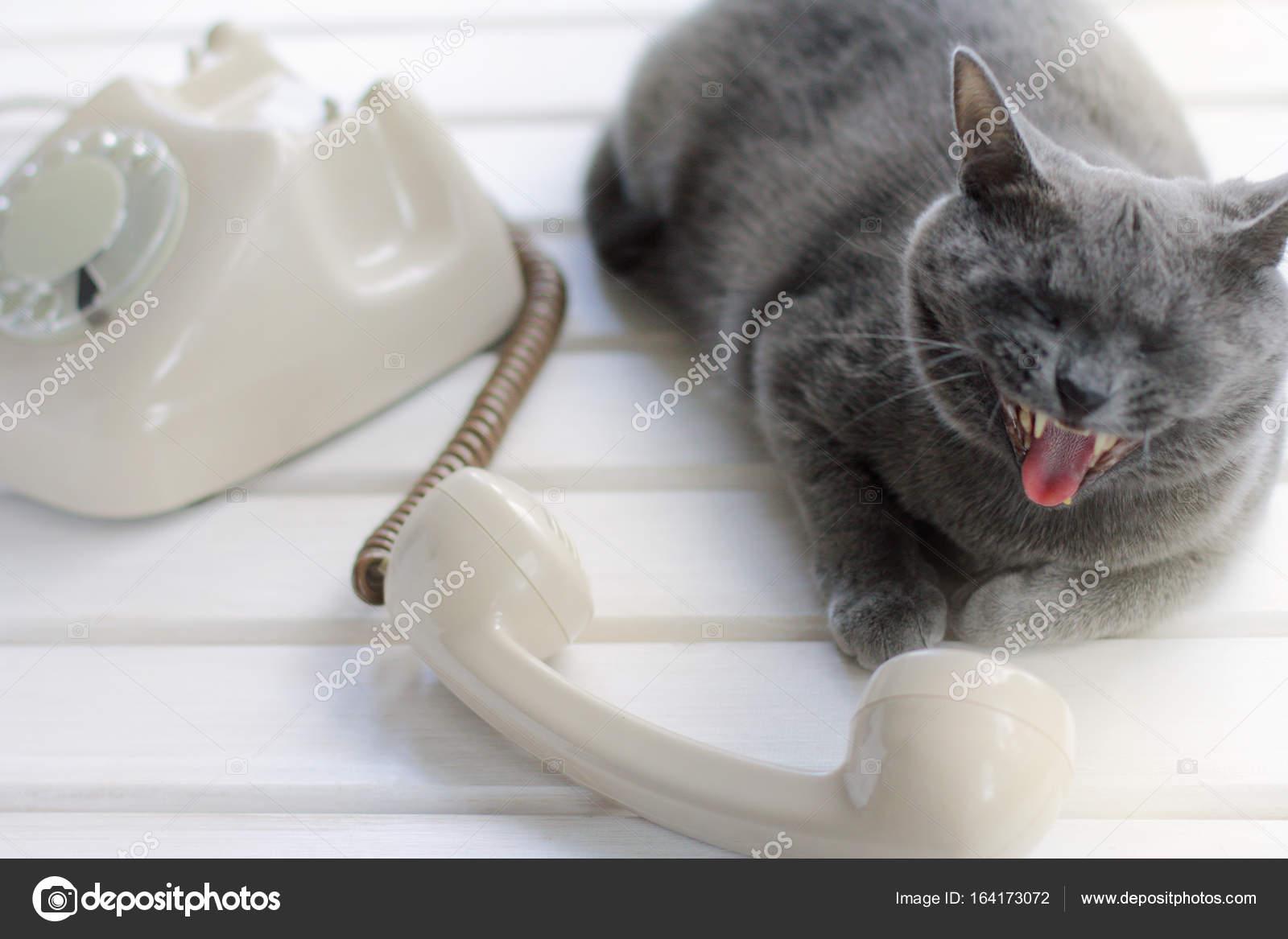Говорящий кот 3 java 240x320 скачать для телефона samsung gt s5230.