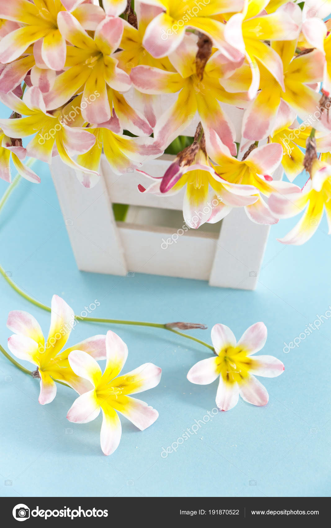 Colorful Spring Flower Bouquet In White Wooden Container And On