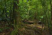 Giungla tropicale sud-est asiatica