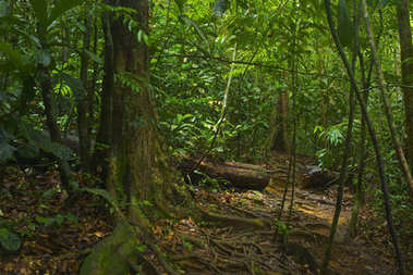 Southeast Asian tropical jungle