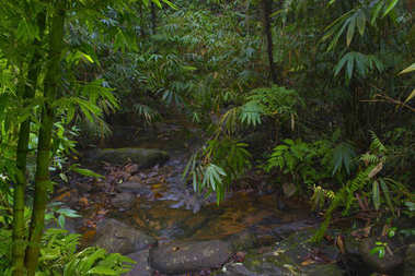 Southeast Asian tropical jungle stock vector